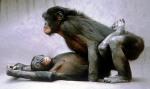 Bonobos-01